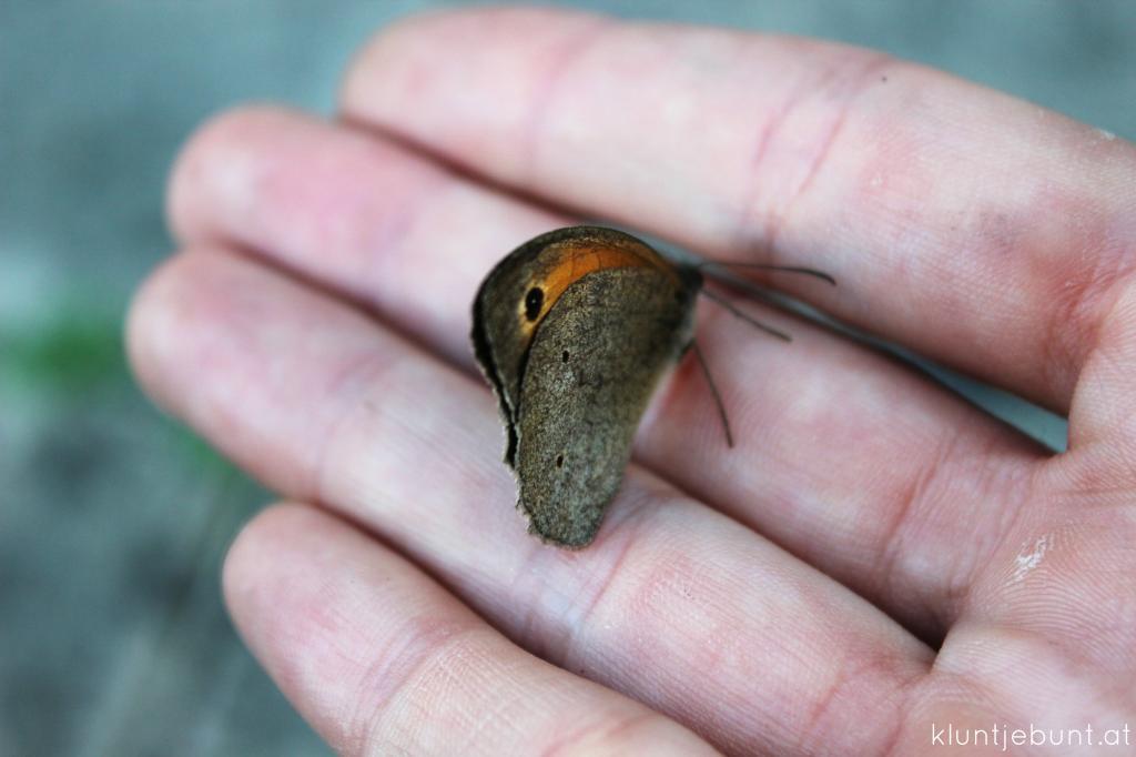 Schmetterling_Makro