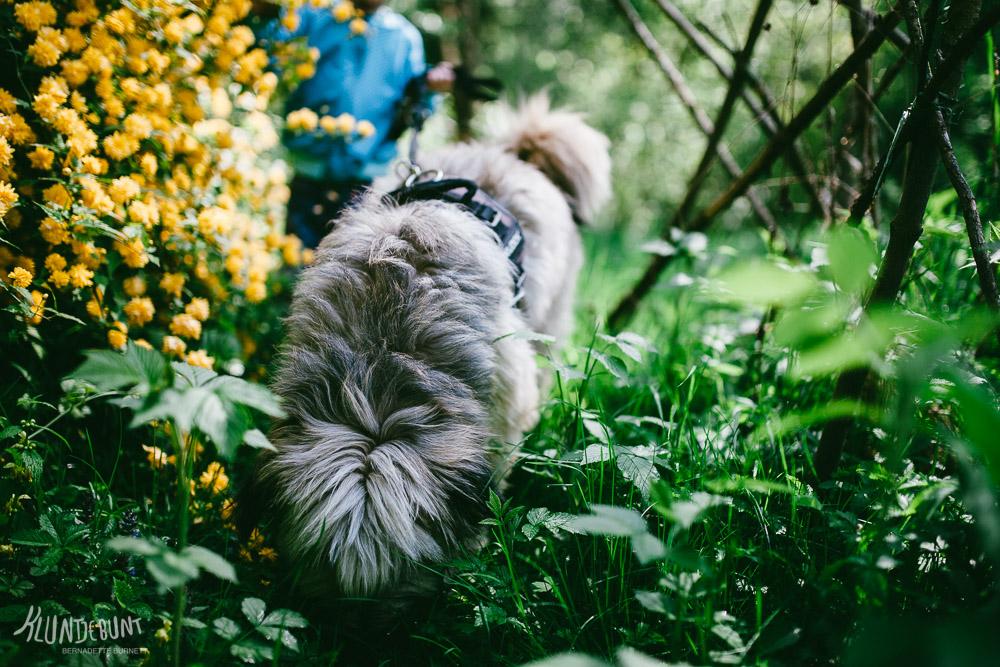 Hund schnüffelt im Gras, im Hintergrund Kind mit selbstgenähter Ottobre Design Jacke aus Lillestoff genäht von Kluntjebunt